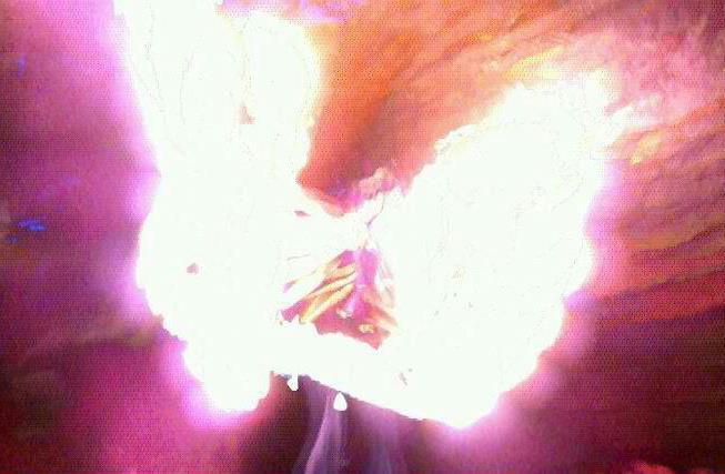 Fire wings!